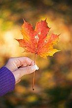 A woman holding an autumn leaf Sweden.