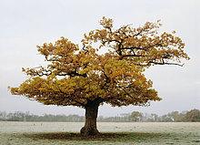 Baum inmitten Feld
