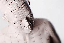 Anatomisches Modell, Kopf mit Akupunkturpunkten