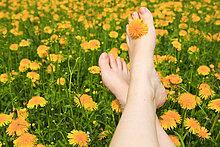 Bein, Blumen, Blumenfeld, Blumenwiese, Blüte, Duft, Entspannung, Erholung, Feld, Frau, Freiheit, Frühling, Füsse, Genuss, Haut