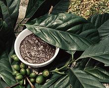 Kaffee-Peeling, Bali