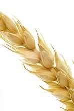Weizenähre, Stilleben