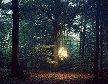 Lampen hängen von Baum im Wald