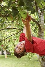 lächeln ,Junge - Person ,Baum ,Frucht ,aufheben