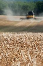 Traktor bei der Ernte von Feldweizen