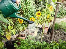 Wasser,Garten,Pflanze,Hinterhof