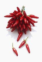 Ein Bund frische rote Chilischoten