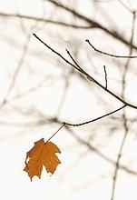 Pflanzenblatt, Pflanzenblätter, Blatt ,Close-up, close-ups, close up, close ups ,Herbst ,Einsamkeit