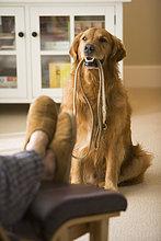 halten ,Hund ,Leine