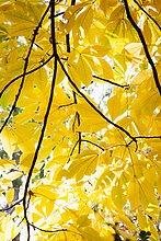 niedrig,Baum,Laub,Ansicht,Flachwinkelansicht,Winkel