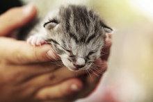 Mädchen hält Kittten in Händen, Nahaufnahme