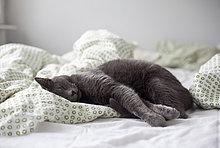 Kätzchen schläft im Bett