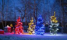 Nacht ,Baum ,bunt ,Beleuchtung, Licht ,Weihnachten ,Dekoration ,Kanada ,Quebec,Weihnachtsbäume