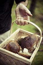 Mittelteil des Mannes, der einen Korb mit Pilzen hält.