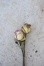 Zwei verwelkte Rosen auf grauer Platte