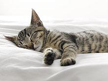 Kätzchen schlafend auf Decken