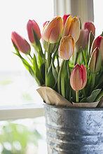 bunt,Close-up,Blumenvase,Tulpe,verzinkt