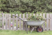 Wheelbarrow full of weeds by fence at farm