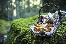 Wald,sammeln,Weidenkorb,Pfifferling
