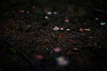Dunkelheit,Wachstum,Wald,Close-up,close-ups,close up,close ups