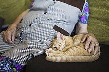 Tabby Kätzchen neben alter Frau auf der Couch liegend