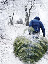 Mann,Weihnachtsbaum,Tannenbaum,ziehen