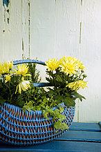 gelb,Weidenkorb,Chrysantheme