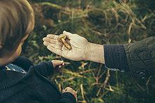 zeigen,Mann,Junge - Person,reifer Erwachsene,reife Erwachsene,Pilz