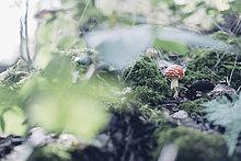 Erde,Erdreich,Boden,Wachstum,Wald,Deutschland,Sachsen