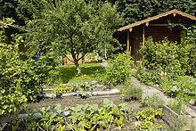 Plants growing in vegetable garden