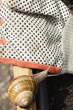 Garden snail moving towards glove on bench