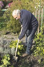 Full length of senior man planting vegetables in garden