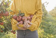 Frau sammelt Äpfel im Obstgarten