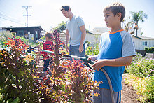 Boy with brother and father spraying plants in allotment