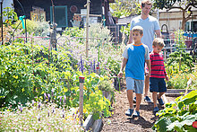 Father and two sons walking in allotment