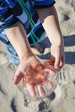 Junge mit Quallen in der Hand