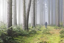 Nebel im Wald, Unterallgäu, Bayern, Deutschland, Europa