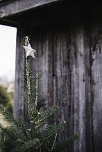 Stern am Weihnachtsbaum