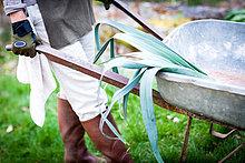 Waist down view of female gardener pushing wheelbarrow in garden
