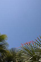 Wort glücklich auf Palme unter blauem Himmel