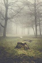 Baumstumpf und Bäume an einem dunstigen Morgen