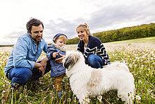 Süßer kleiner Junge mit Eltern und Hund im Löwenzahnfeld