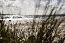 Frankreich, Normandie, Portbail, Contentin, Reiter am Strand von der Düne aus gesehen