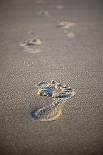 Fußspuren im Sand, Sylt, Schleswig-Holstein, Deutschland, Europa